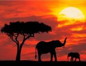 Safari Kenya & Mare Agosto 2018