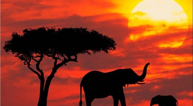 Safari Kenya & Mare